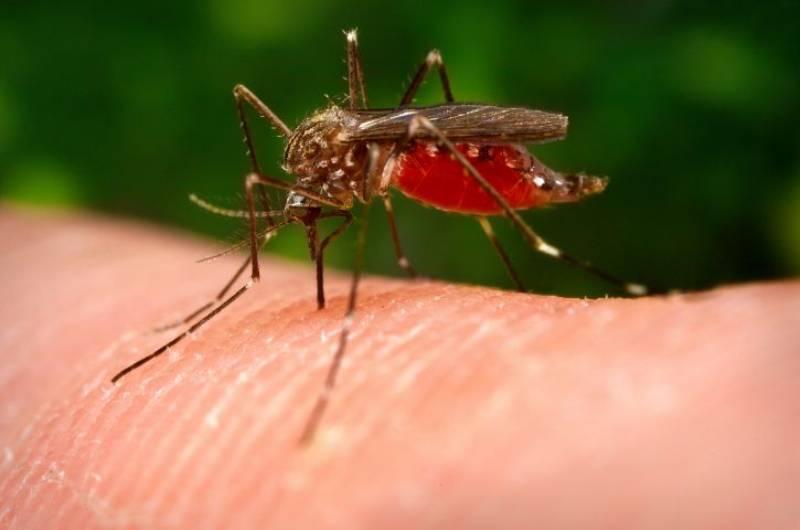 insetti che fastidio olio di neem repellente naturale