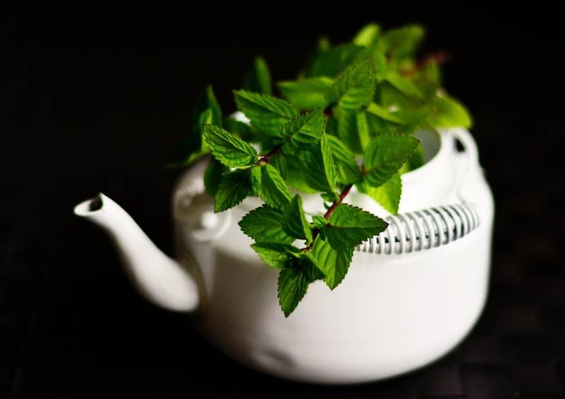 raffreddore tosse mal di gola e febbre facciamoci aiutare dalle piante medicinali